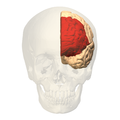 deciding brain 2