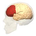 deciding brain 3